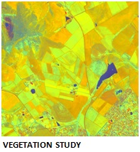 vegetation study